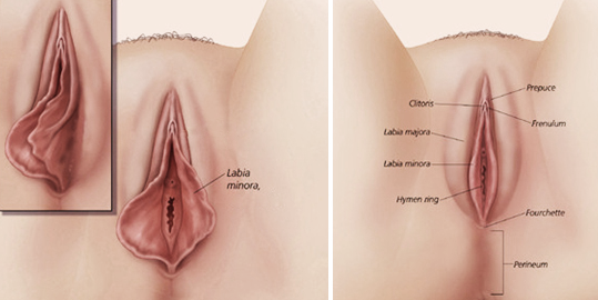 Clitoral g spot orgasm